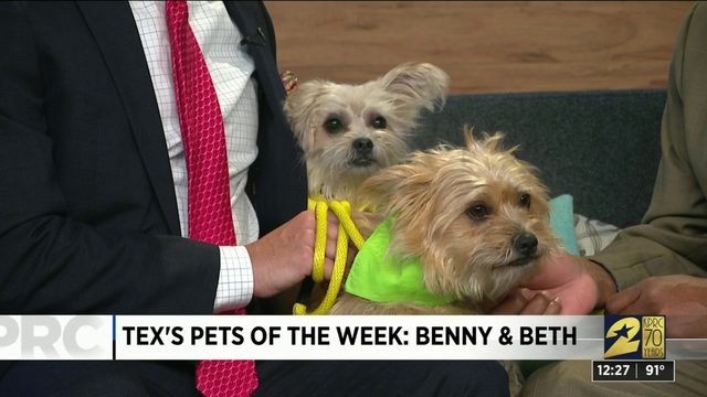 Pets of the week: Benny and Beth