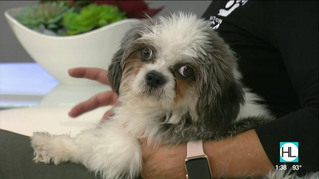 Tex's Pet of the Week: Shin-Tao | HOUSTON LIFE | KPRC2