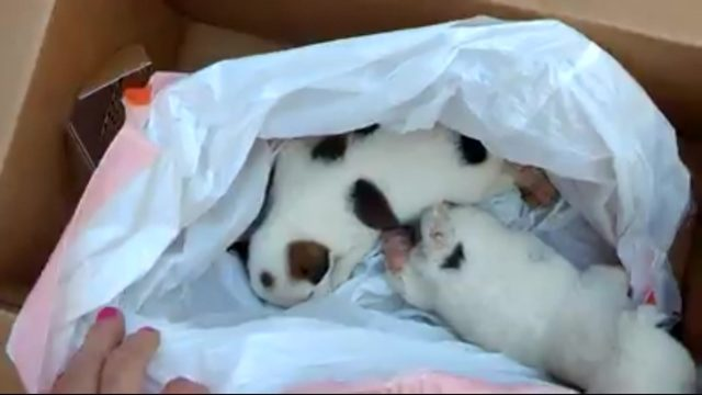 Puppies left at animal shelter in trash bag