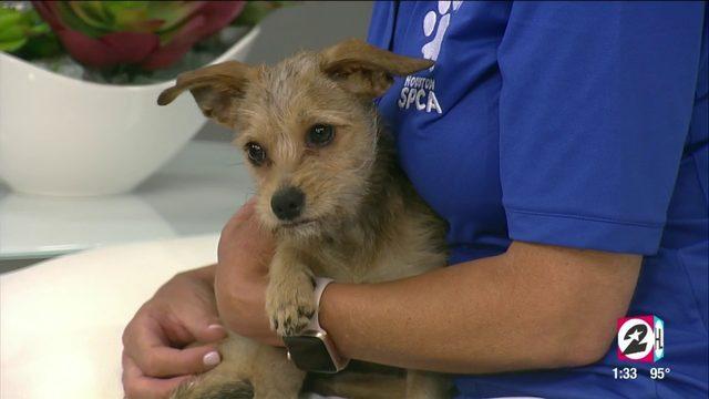 Tex's Pet of the Week: Gio   HOUSTON LIFE   KPRC2