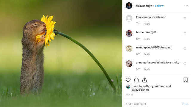 Squirrel 'sniffing' flower photo goes viral
