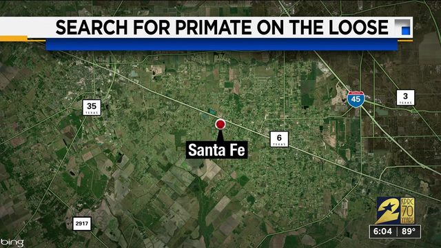 Search for primate in Santa Fe
