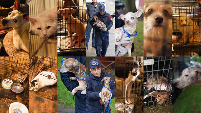 40+ dogs, cats removed from 'filthy' Spring Branch home, constable says