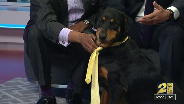 Pet of the week: Selma