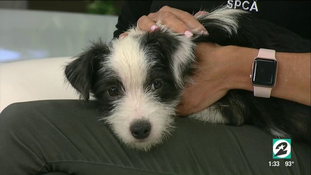 Tex's Pet of the Week: Bandit | HOUSTON LIFE | KPRC2