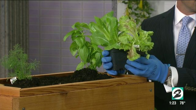 How to create a container garden in Houston this fall | HOUSTON LIFE | KPRC