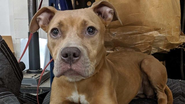 Meet Penny: This is the sweet dog that found her way to KPRC as Imelda…