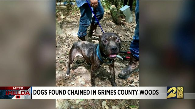 Dogs found chained in Grimes County woods