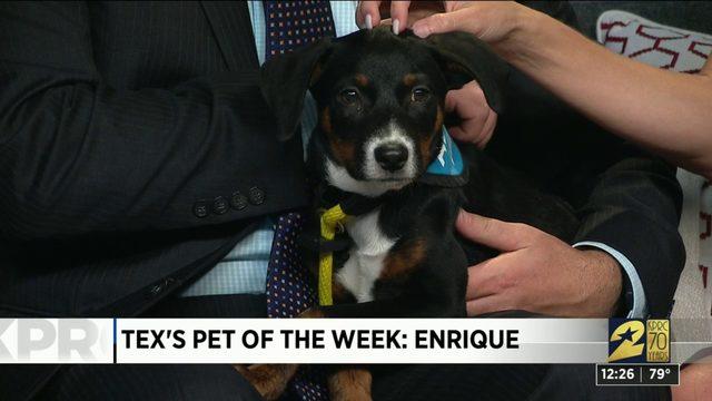 Pet of the week: Enrique