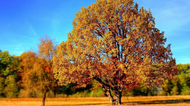 Welcome to fall, y'all: Here's what you need to know about the autumnal equinox