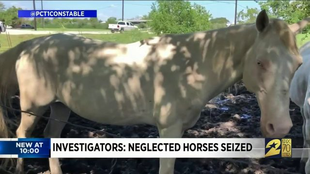 Investigators: Neglected horses seized