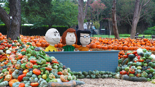 Childhood dream! Charlie Brown-themed pumpkin patch opens at Dallas Arboretum