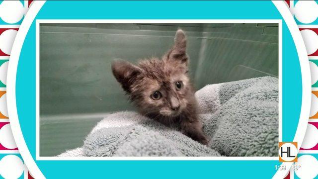 Amazing Animal Tale: Kitten Rescue   HOUSTON LIFE   KPRC2