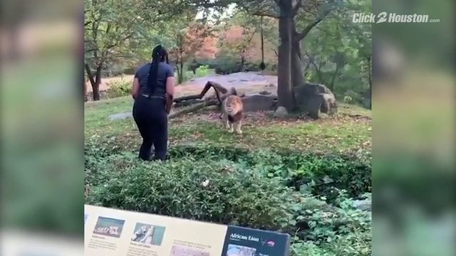 Woman taunts lion in its enclosure