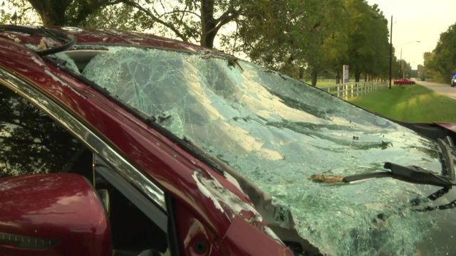Falling tree smashes car on road