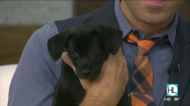 Tex's Pet of the Week: Claudia | HOUSTON LIFE | KPRC2