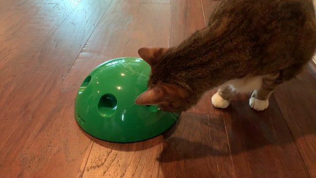 Is the 'Pop n' Play' cat toy worth your money?