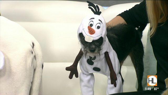 Houston pet expert shares Halloween safety tips for dogs | HOUSTON LIFE…