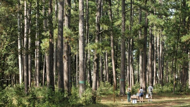 Take a walk on the wild side with these Woodlands-area trails