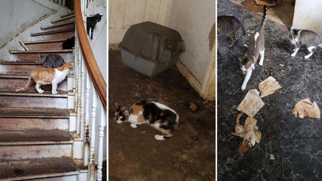 More than 100 cats rescued from home in New Caney