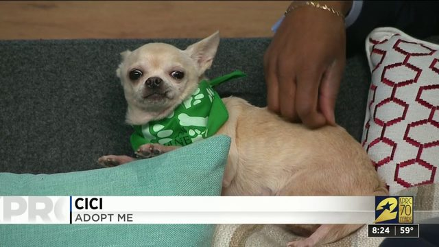 Pet Project: Cici