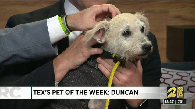 Pet of the week: Duncan
