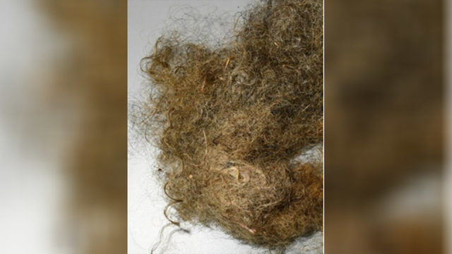 Officials release photo of woman's hair with hopes to ID her body found…
