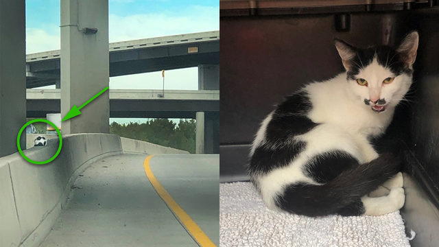 Adorable mustachioed kitten rescued from major Houston highway