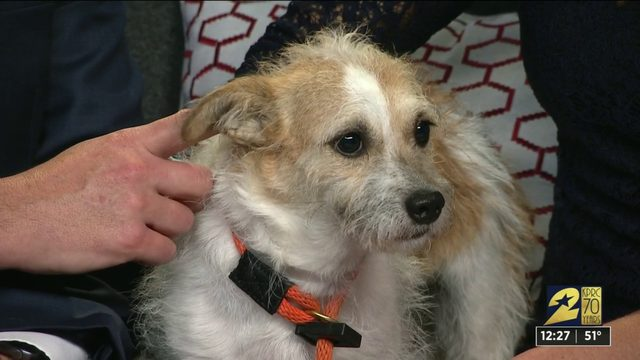 Pet of the week: Sissy