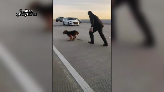Good Samaritans stop traffic on Beltway 8 near Highway 90 to save dog