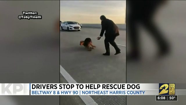 Drivers stop to help rescue dog