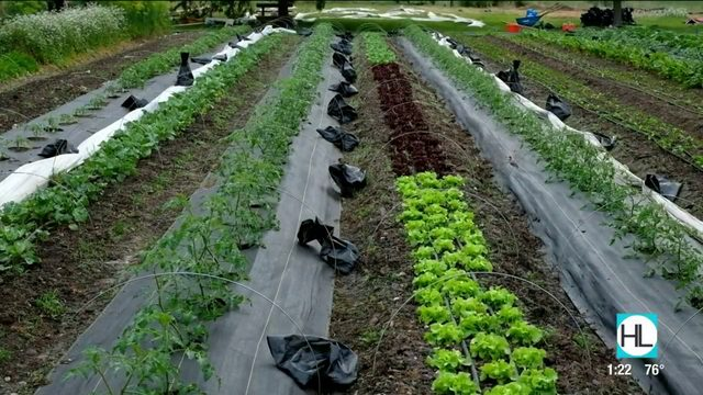 Warriors to Farmers Training Program at Hope Farms | HOUSTON LIFE | KPRC 2