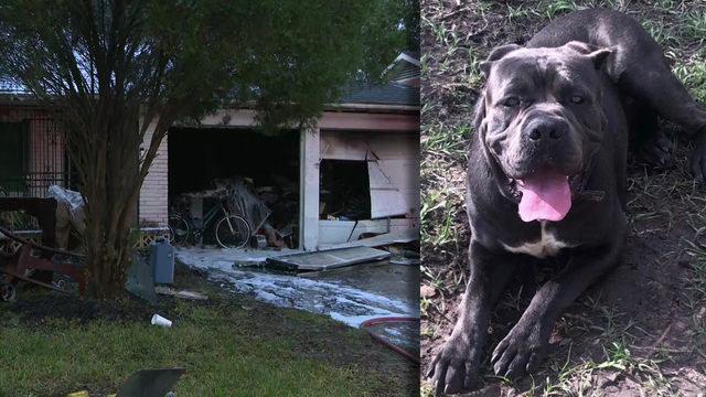 'That's my best friend': Dog killed in fire caused by space heater