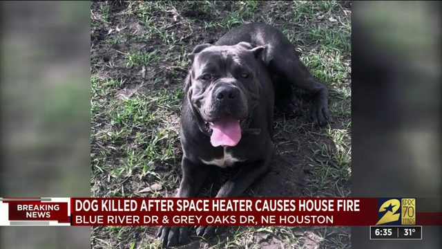 Dog killed in house fire